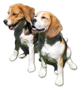 dogtraining4