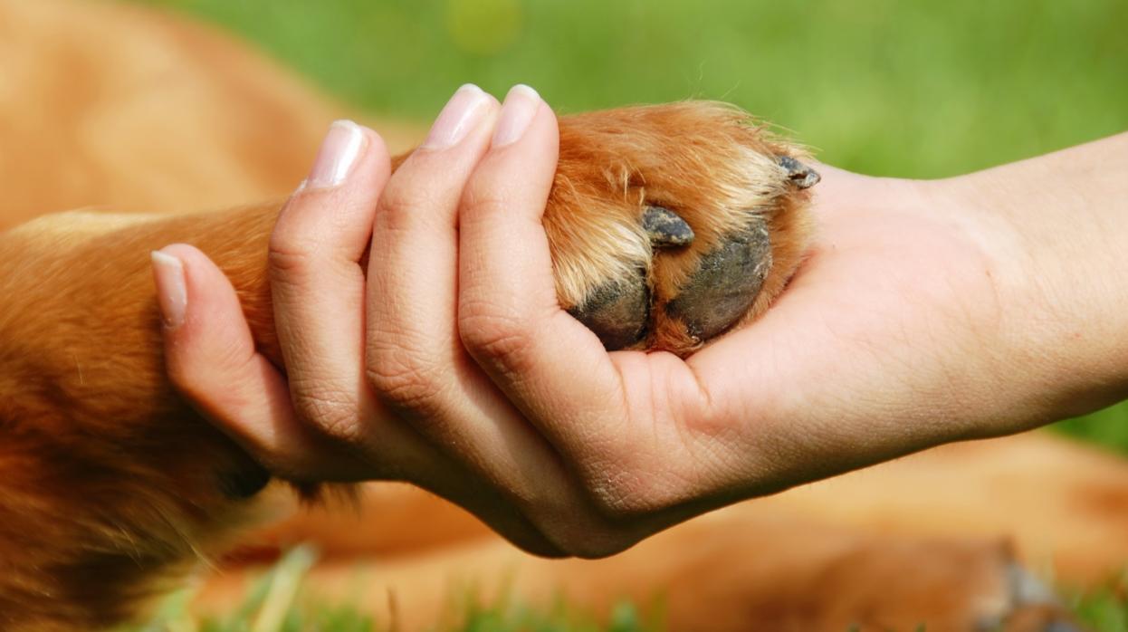 handshake dog